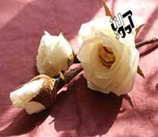 گل رز سفید شکلاتی